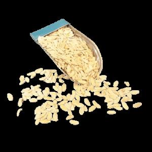 قیمت خرید بذر خیار چنبر